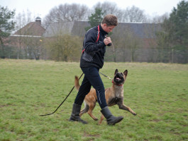 Clinic obedience with our interns
